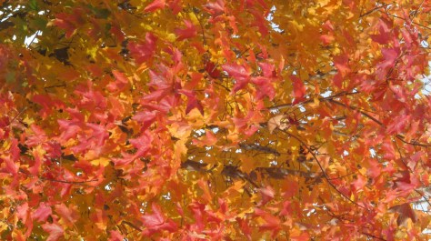 Colors of fall in the Finger Lakes-my favorite ti