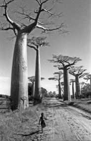 Madagascar. Morondava