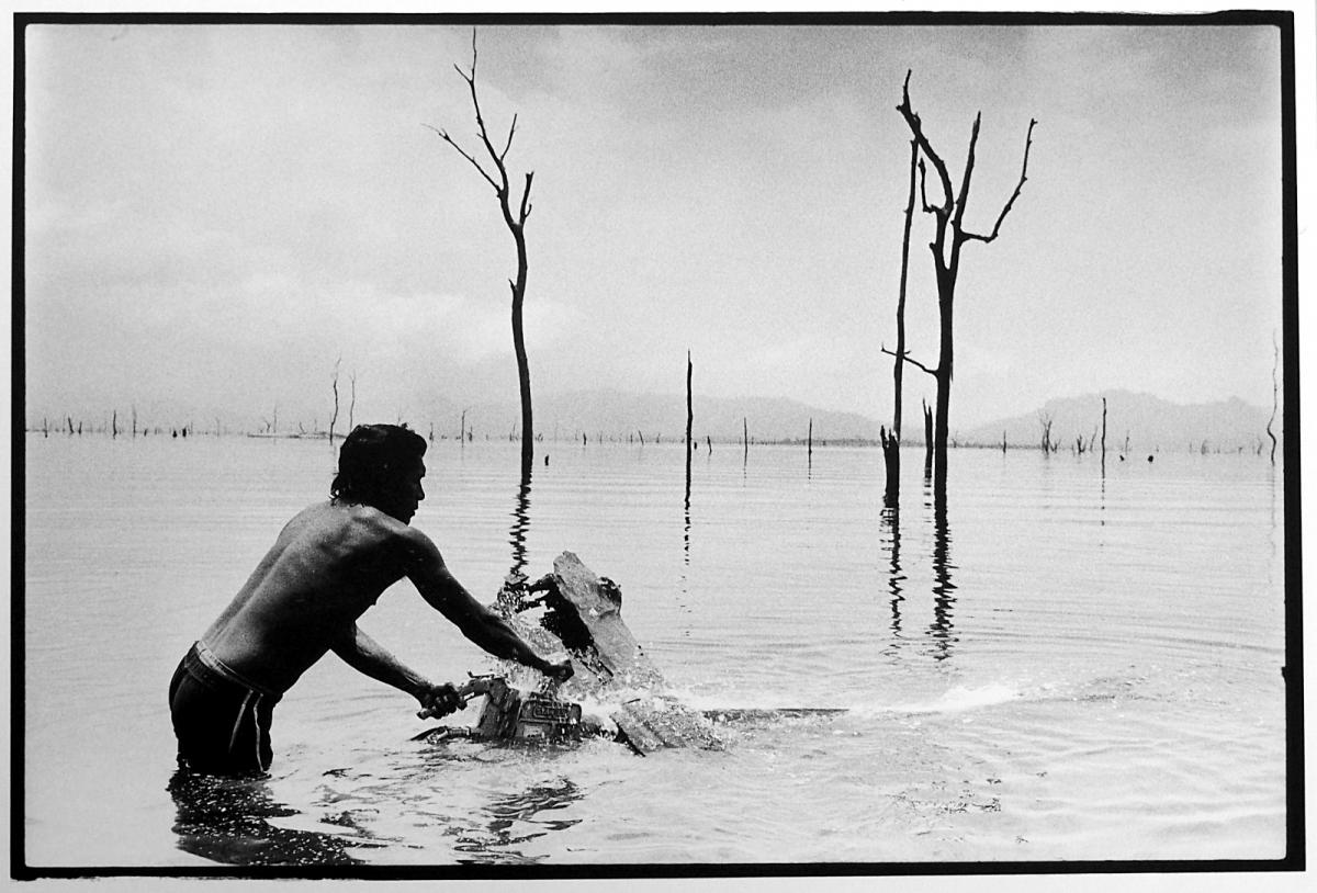 Underwater logging in Panama