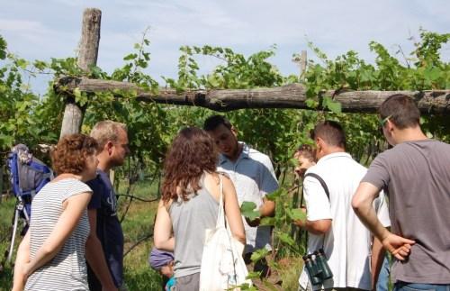 Matej Lupinc spiega il suo lavoro in vigna ai visitatori