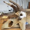 Big John triceratopo