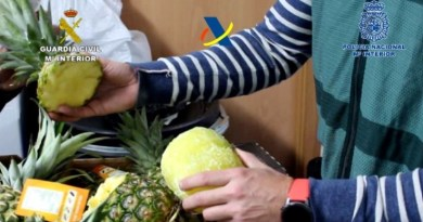 "Dismantled a criminal organization that introduced cocaine into Spain inside ""pregnant"" pineapples"