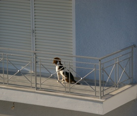 beagle-on-balcony.jpg