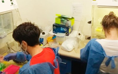 La ANMAT autorizó el uso de un kit que agiliza los testeos de coronavirus