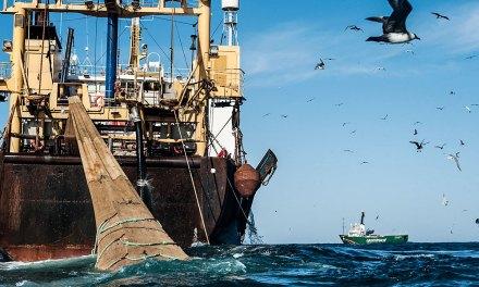 Pesca ilegal en el Mar Argentino: entre la destrucción del ecosistema y las pérdidas millonarias