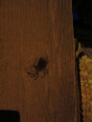 You know a spider is big when it leaves a shadow.