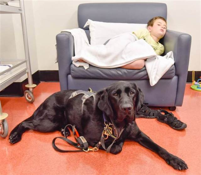 therapy-dog-today-inline-2-160224_d11efeabf4b48cdf0fd78b20d0358b4e.today-inline-large