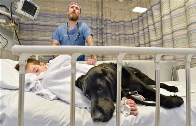 therapy-dog-today-inline-4-160224_d11efeabf4b48cdf0fd78b20d0358b4e.today-inline-large