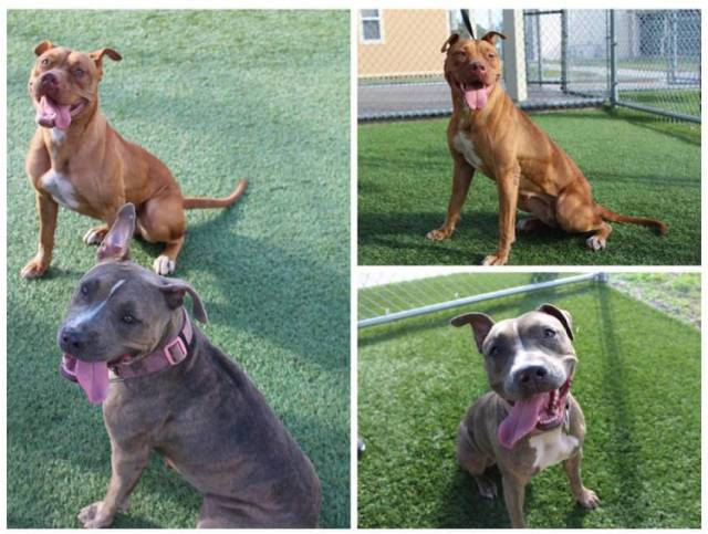 Facebook / Orange County Animal Services