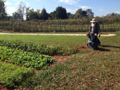"""We also had the chance to visit the new farm on the Guilford College campus, built since I graduated and now supplying the cafeteria, local CSA members, and soon a """"mobile farmer's market"""" in Greensboro's food deserts."""
