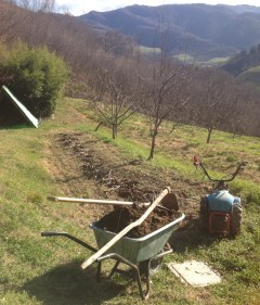 Step 2: Collect branches (from dead elms) and manure