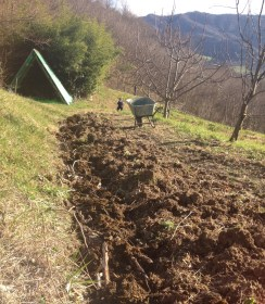 Step 4: Spread manure over branches to add nutrients