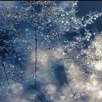 Frost an Grashalmen im Licht