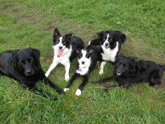 dog group image