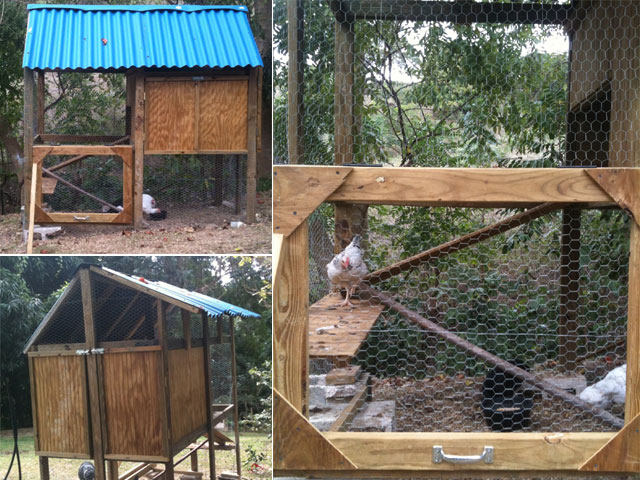 Tropical Chicken Coop Pictures