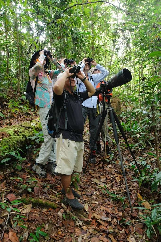 Birdwatching at Lubok Kasai Jungle Camp