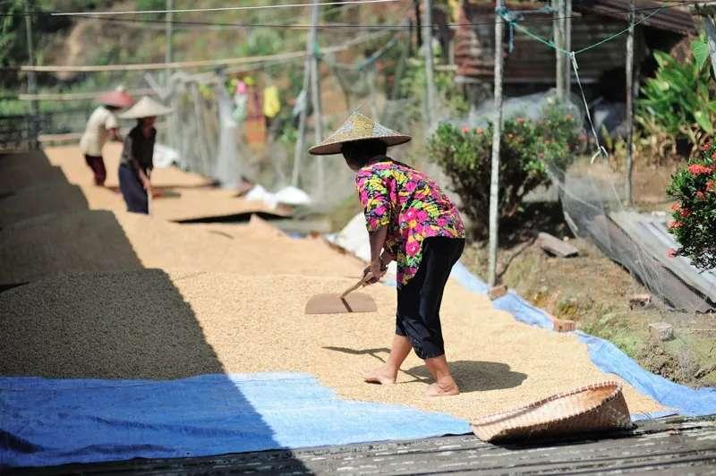 Iban ladies dry rice at Menyang Tais Iban Longhouse, Sarawak, Malaysia.