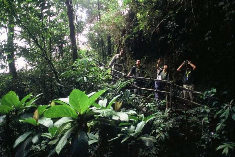 Trekking in Kinabalu Park, Sabah, Malaysia.