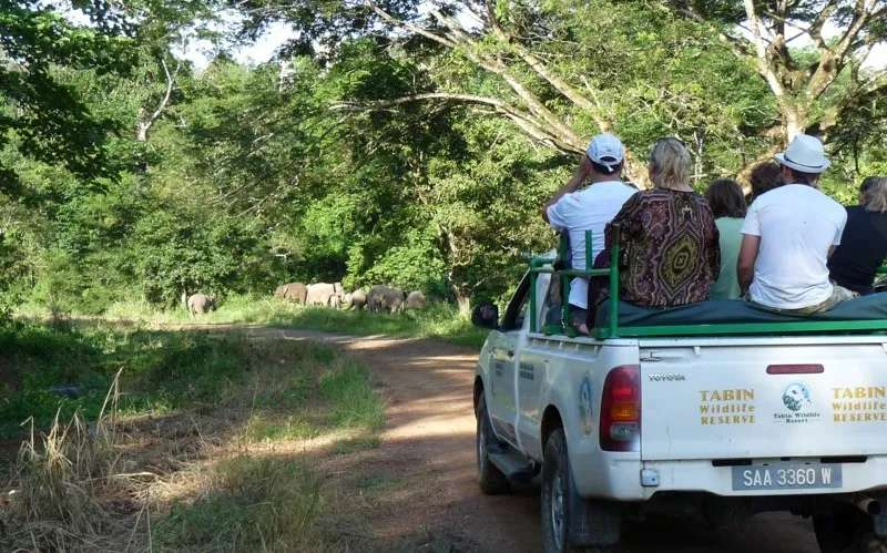 A group of tourists views elephants from a 4WD pick-up at Tabin Wildlife Reserve, Sabah, Malaysia