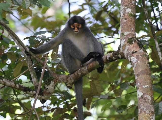 Tabin Wildlife Reserve 3D2N