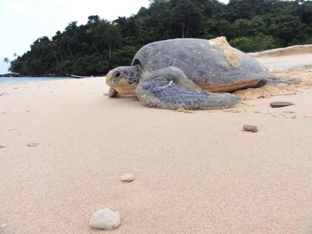 Sarawak Turtle Volunteer Programme 3D2N