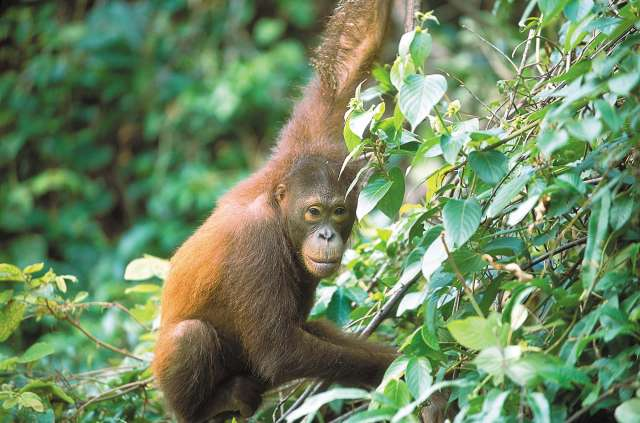 Borneo Rivers, Rainforest & Wildlife 10D9N