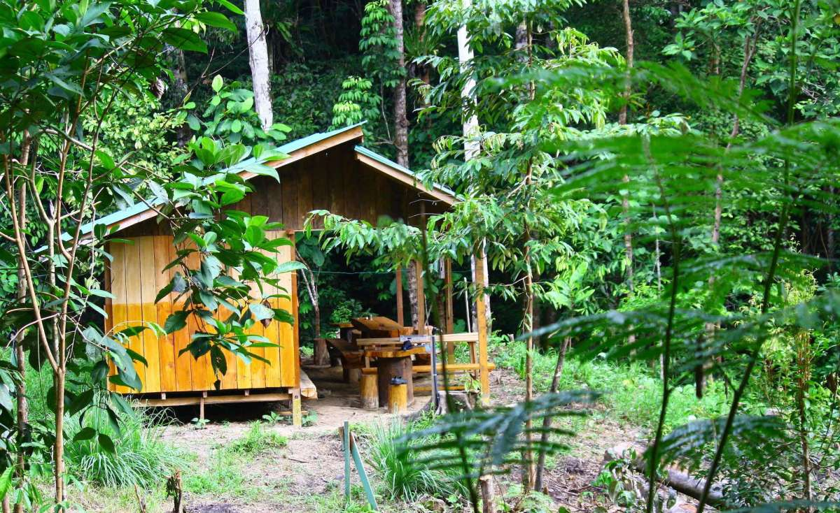 Mawang Rainforest Camp