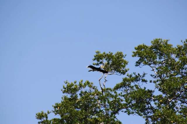 Deramakot Forest Reserve 3D2N