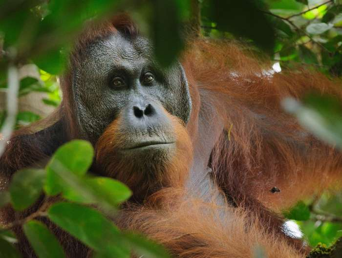 5 best places to see orangutans in Borneo