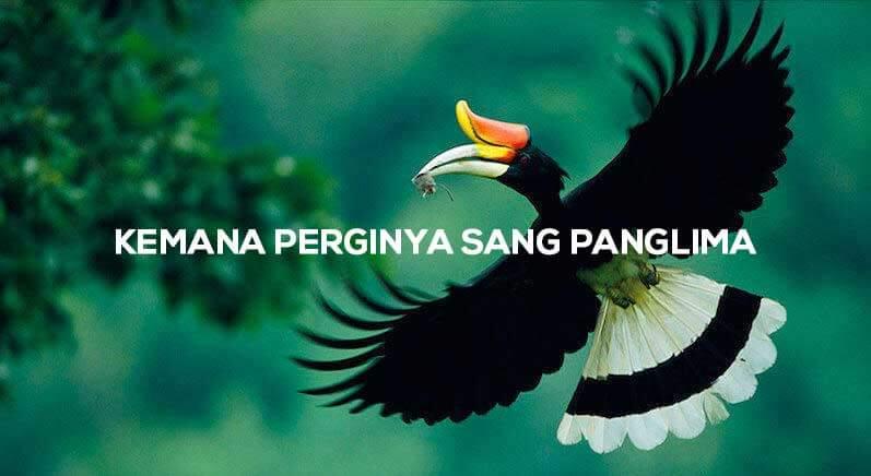 [MIRIS] Burung Enggang – Sang Panglima Burung yang Tinggal Sejarah