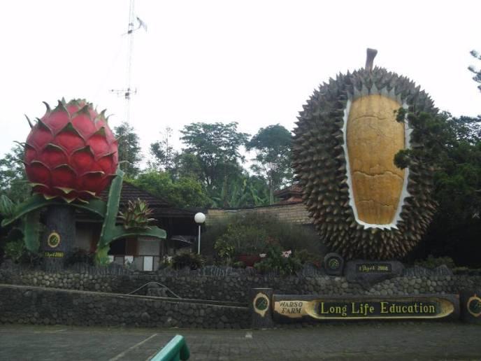 Wisata buah