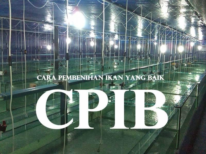 sertifikat cpib