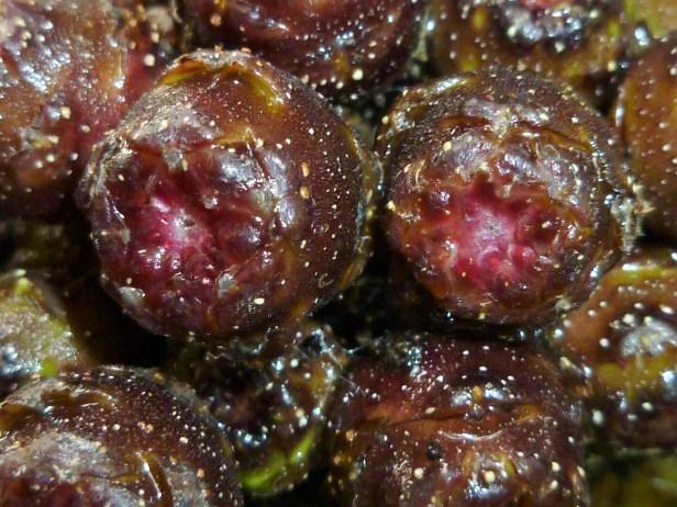06-moraceae-ficus-merah-7