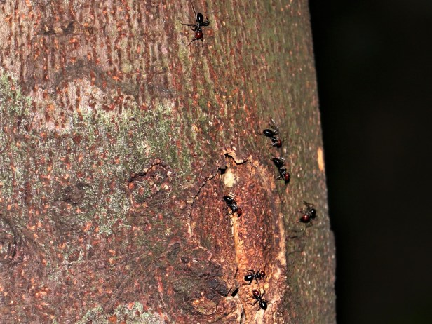 ants-at-hole-3p7a6698