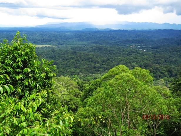 bukit-patoi-view-img_3693