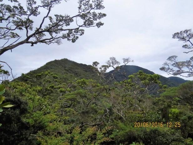 ficus-oleifolia-img_5007