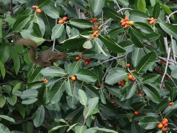 squirrel-3p7a1233