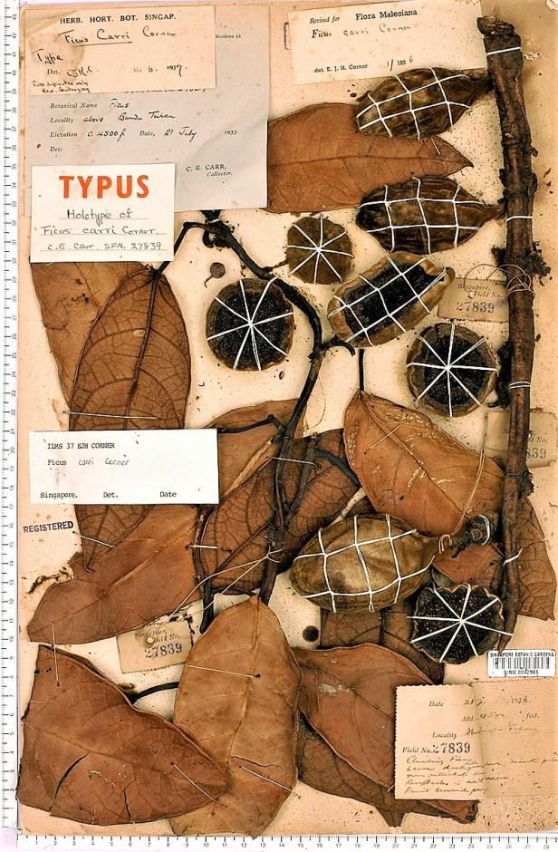TYPE carrii SING - ENHANCED.jpg