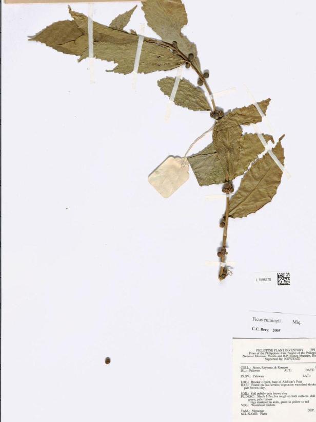 L.1596578 Brookes Point Palawan - Copy.jpg