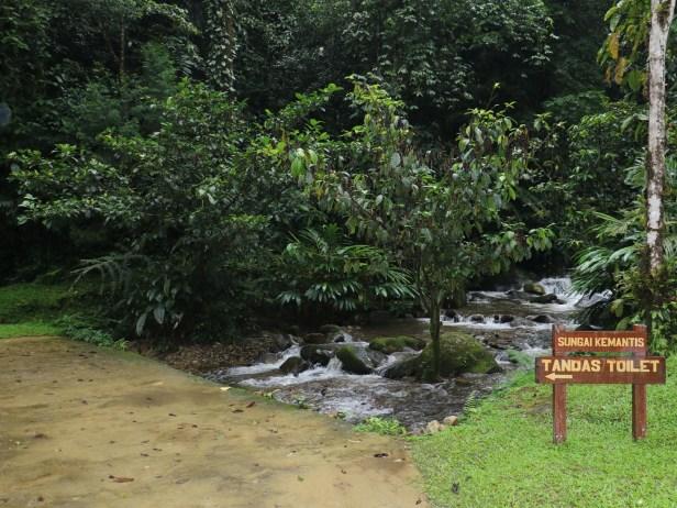 Ficus lepicarpa IMG_0787