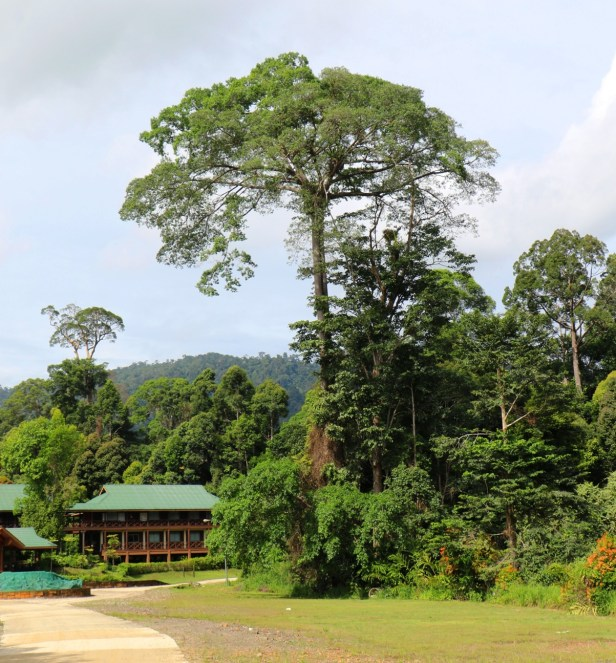 Maliau Study Centre IMG_0259.JPG