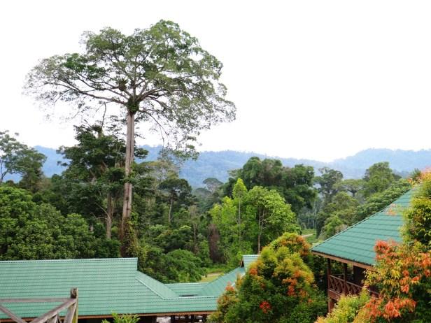 Maliau Study Centre IMG_0475.JPG