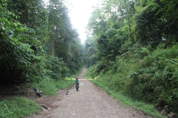Tomanggong Road, Tabin IMG_5792.jpg