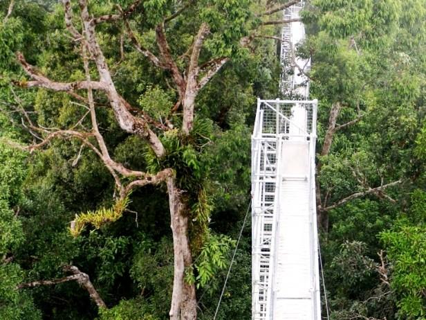 Belalong Canoy Walkway  IMG_0316.JPG