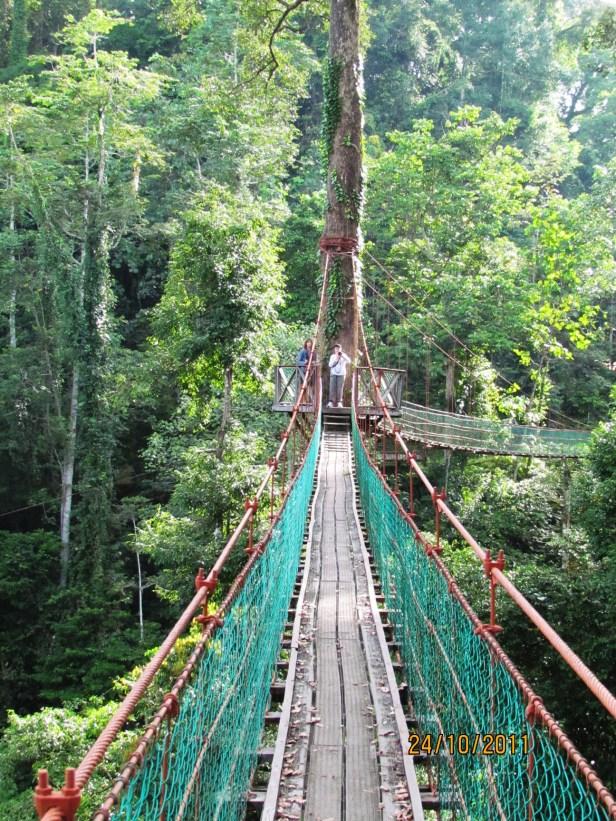 Variegata IMG_5641 Canopy walkway 01