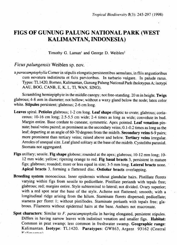 Laman & Weiblen (1998) Ficus palungensis.jpg