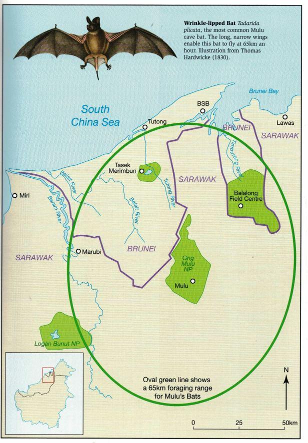 Mulu Bat Map.jpg