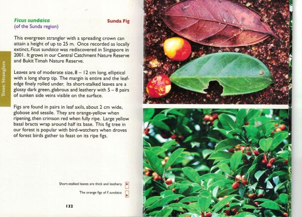 Figs of Singapore book