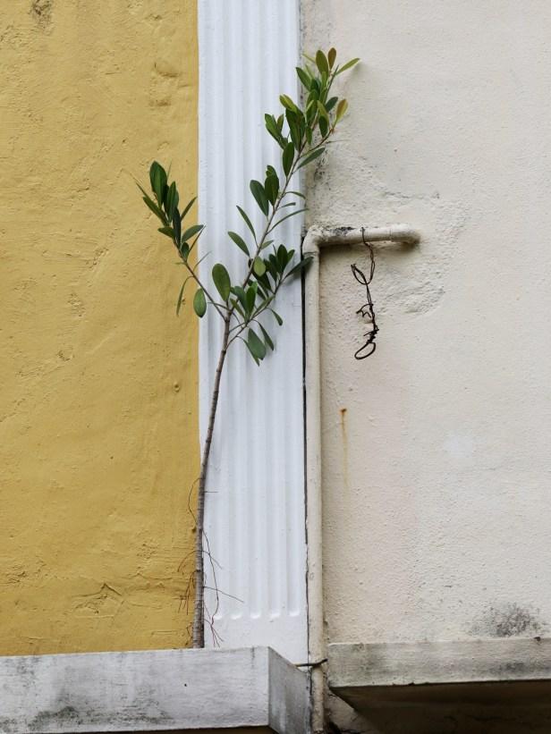 03 Ficus spathulifolia 3Y3A0628.JPG