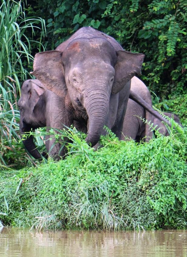 Mama elephant face on 3P7A7382.JPG